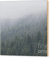 Pine Tree Forest In The Mist Wood Print