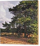 Pine Tree In Hoge Veluwe National Park 1. Netherlands Wood Print