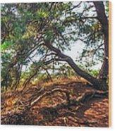 Pine Tree In Hoge Veluwe National Park 2. Netherlands Wood Print