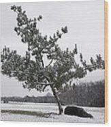 Pine Tree Wood Print
