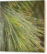 Pine Tree Needles Wood Print