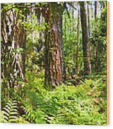 Pine Trees And Ferns Wood Print