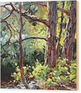 Pine Trees In Sunlight Wood Print