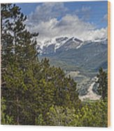 Pine Trees In The Rocky Mountain National Park Wood Print