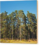 Pine Trees Of Valaam Island Wood Print
