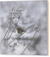 Pine Warbler In The Snow - Better Than Red Wood Print