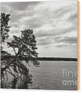 Pinelands Memories Wood Print