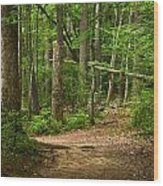 Pinewood Path Wood Print