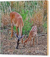 Piney Mountain Doe And Fawn Wood Print
