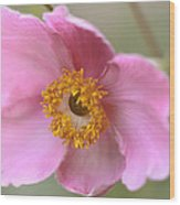 Pink-a-boo Wood Print