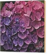 Pink And Blue Hydrangea Wood Print