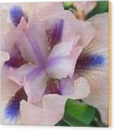 Pink And Blue Iris Wood Print