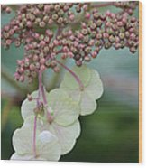 Pink And Green Hydrangea Closeup Wood Print