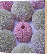 Pink And Green Urchins Wood Print