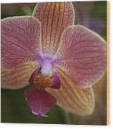 Pink And Orange Orchid Wood Print