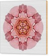 Pink And Orange Rose Iv Flower Mandala White Wood Print