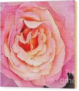 Pink And Peach Rose Flower Wood Print