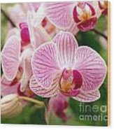 Pink And Purple Butterfly Orchids Wood Print