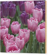 Pink And Purple Dutch Tulips Wood Print