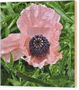 Pink And Purple Poppy Wood Print