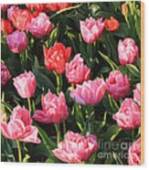Pink And Red Ruffly Tulips Square Wood Print