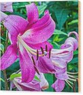 Pink And Sassy 2 Wood Print