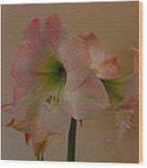 Pink And White Amaryllis  Wood Print