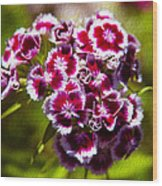 Pink And White Carnations Wood Print