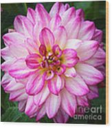 Pink And White Dahlia Square Wood Print