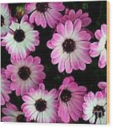 Pink And White Daisies Wood Print