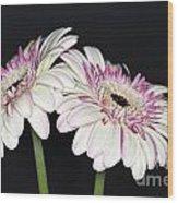 Pink And White Gerbera 2 Wood Print