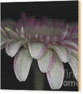 Pink And White Gerbera 3 Wood Print