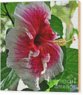 Pink And White Hibiscus Wood Print