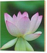 Pink And White Lotus Flower Wood Print