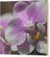 Pink And White Orchid Wood Print