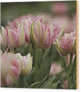 Pink And White Tulip Wood Print by Lesley Rigg