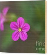 Pink And Yellow Flowers With Green Blurry Background Wood Print