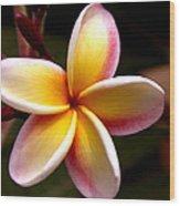 Pink And Yellow Plumeria Wood Print