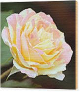 Pink And Yellow Rose Wood Print