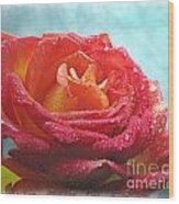 Pink And Yellow Rose With Dew II  Wood Print