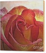 Pink And Yellow Rose With Water Drops Wood Print
