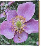 Pink Anemone Flower Wood Print