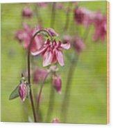 Pink Aquilegia Wood Print