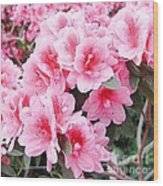Pink Azalea In Bloom Wood Print by Halyna  Yarova