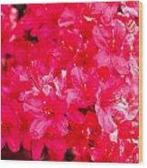 Pink Azalea's Wood Print