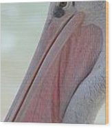 Pink Backed Pelican Wood Print