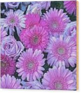 Pink Background Daisy And Roses Wood Print