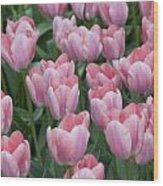 Pink Beauties Wood Print