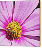 #pink Wood Print