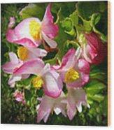 Pink Begonia Wood Print